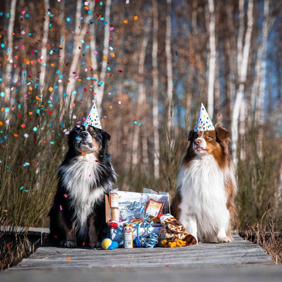 Jarige honden in de kijker - Dierencadeau - Oudsbergen