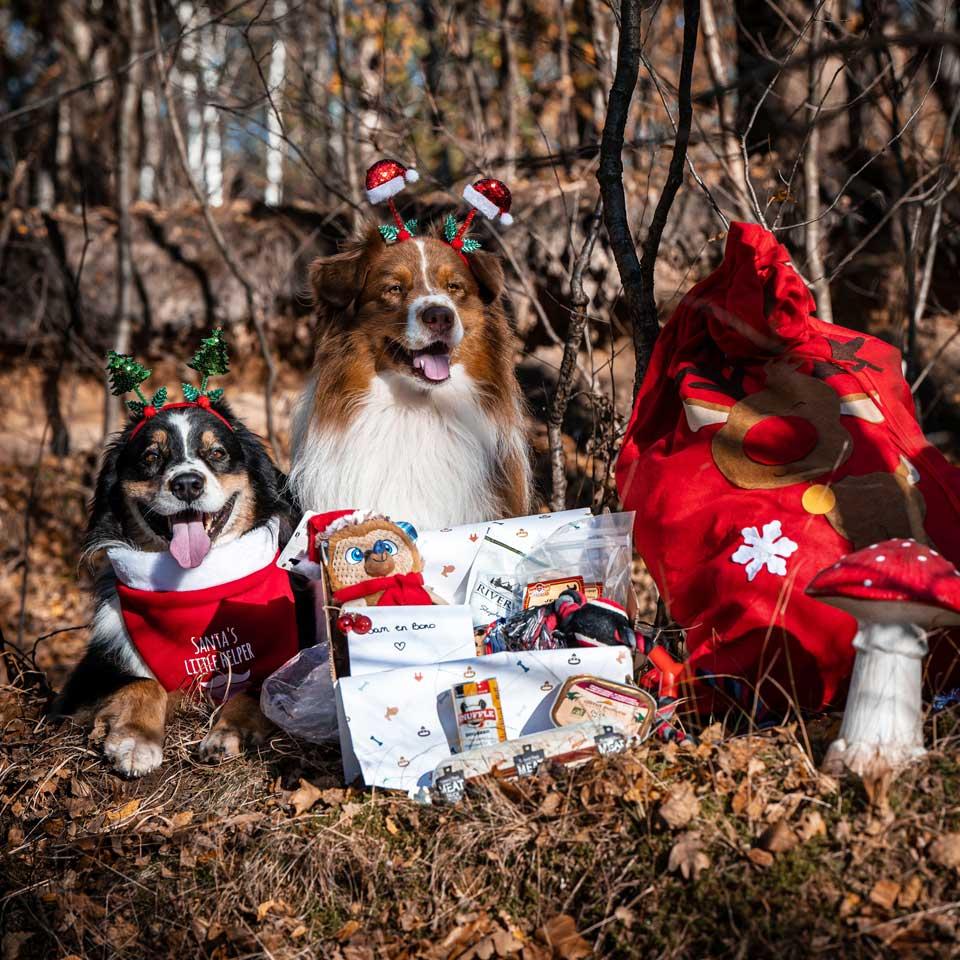 Honden met kerstcadeau - Dierencadeau - Oudsbergen