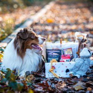 Hond met hondenbox - Dierencadeau - Oudsbergen