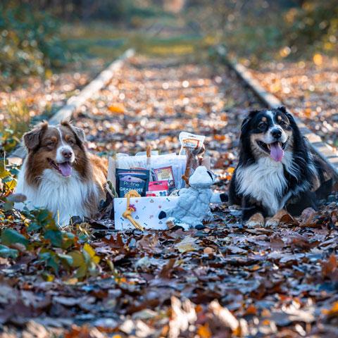 Honden met hondenbox - Dierencadeau - Oudsbergen