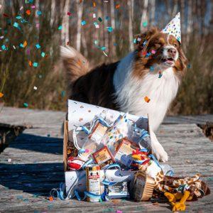 Jarige hond met hoedje en cadeaubox - Dierencadeau - Oudsbergen