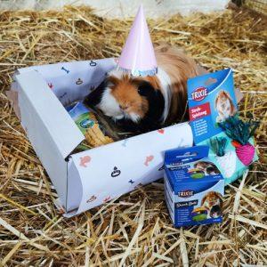 Knaagbox verjaardagscadeau met cavia met hoedje - Dierencadeau - Oudsbergen