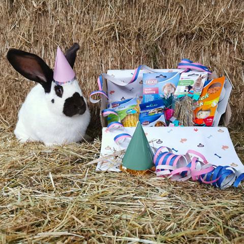 Knaagbox verjaardagscadeau met konijn met hoedje - Dierencadeau - Oudsbergen
