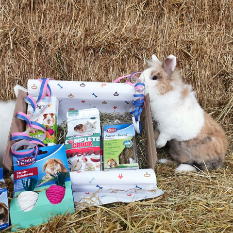 Knaagbox verjaardagscadeau met konijn - Dierencadeau - Oudsbergen