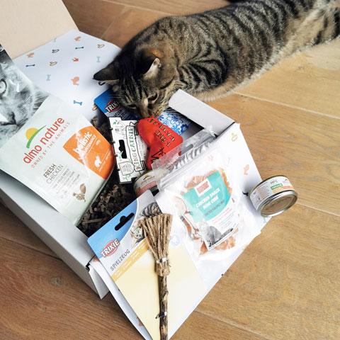 Kat snuistert in kattenbox - Dierencadeau - Oudsbergen