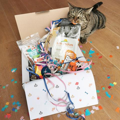 Kat proeft van verjaardagscadeau - Dierencadeau - Oudsbergen