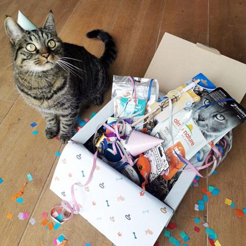 Kat met verjaardagscadeau - Dierencadeau - Oudsbergen